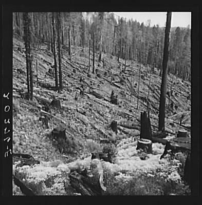 Logged over Land,Southern Oregon,OR,Farm Security Administration,1939,FSA