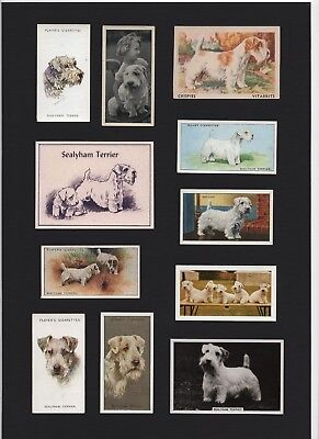 Sealyham Terrier  Mounted Set Vintage Dog Collectable Cigarette And Trade Cards