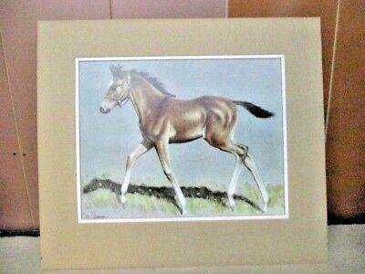 """C.W. ANDERSON  COLT PRINT 13"""" x 10"""" / OVERALL 18"""" X 16""""  DOUBLE MATTED"""