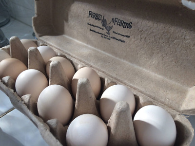 Fertile Frizzle Bantam Chicken Eggs 6+ w expedited shipping USPS(1 business day)
