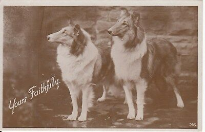 Vintage B&W Postcard, Dogs, Collies c1930s, (s), used Postage Combined