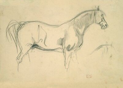Studies of a Horse in Profile by Eugene Delacroix Horse Anatomy Poster