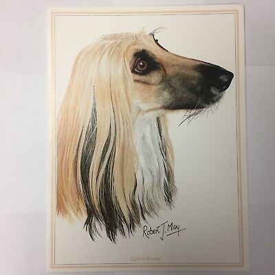 Afghan Hound, Dogs, Animals, Collectibles | PicClick CA