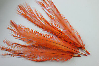 """""""Glycerined vulture feathers"""" quills orange rhea fly tying millinery hat trims"""