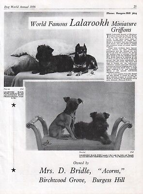 Brussels Griffon Dog World Breed Kennel Advert Print Page Lalarookh Kennel 1956