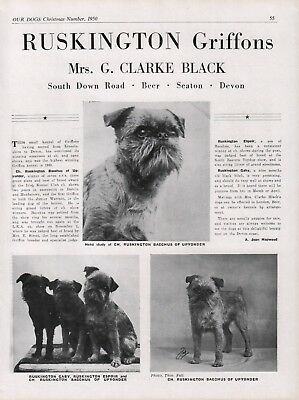 Brussels Griffon Our Dogs Breed Kennel Advert Print Page Ruskington Kennel 1950