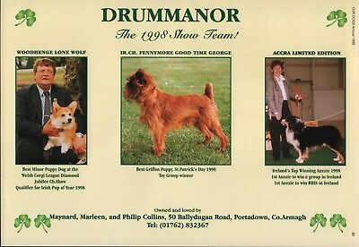 Brussels Griffon Our Dogs Breed Kennel Advert Print Page Drummanor Kennel 1999