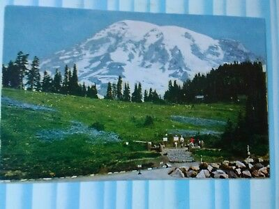 Vintage Post Card From Skyline Trail Paradise Inn Mount Rainier National Park Wa