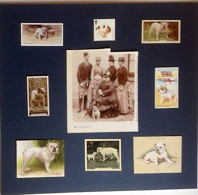 Bulldog - Collectables - DIY Collage. You layout and mount.