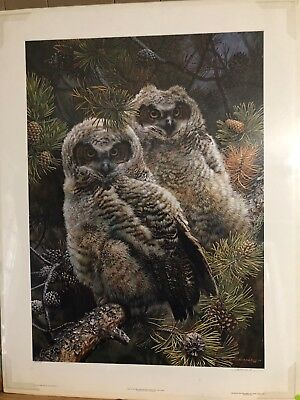 Hidden in the pines - Great Horned Owls, Carl Brenders, Limited edition print