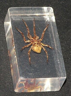 Spider in Glass Perspex Glass Spider Paperweight