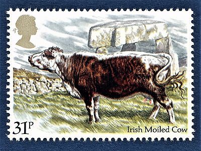 GB Irish Moiled Cow  / Cattle Breed / on a Stamp - U/M