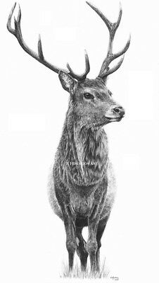 Cernunnos the Red Deer Stag - Limited Edition Print
