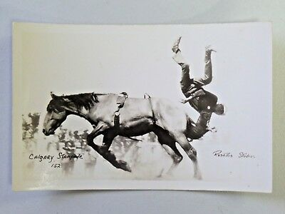 Vtg. Real Photo Postcard Calgary Stampede 152 Cowboy Falling Off Horse 2845