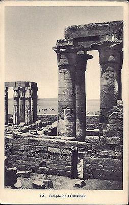 Africa Egypt old PC Luxor Temple Papyrus Columns camel post card real photo
