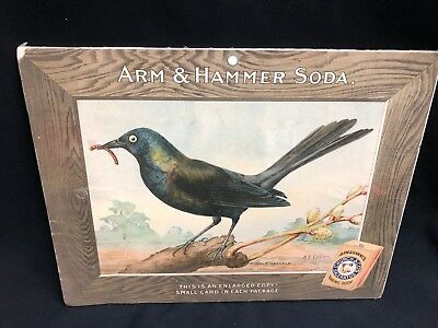 Large Arm and Hammer Baking Soda Purple Grackle Bird Card Store Sign M.E. Eaton