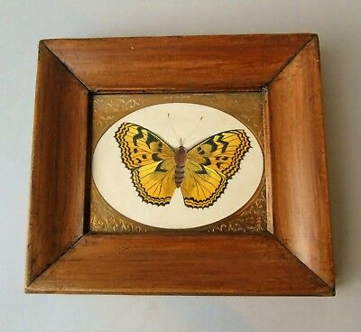 Antique Hand Painted Butterfly Watercolour