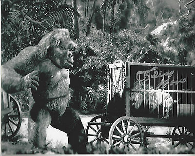 Movie Mighty Joe Young photo  Autographed by Terry Moore 8x10 photo bonus photo