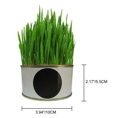 Pet Snacks Supplies Indoor Cat Grass Grow Seed Kit Can Cat Healthy Treats Toys
