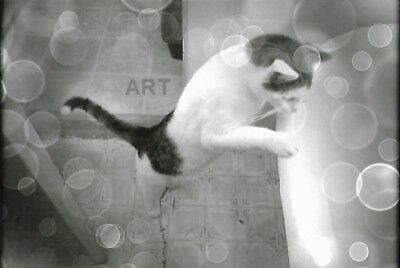 Black White Cat Checks Out Bath not ACEO4 x 6 photo print of a original picture