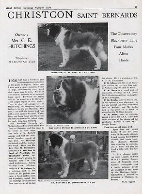 Saint Bernard Dog Breed Kennel Advert Print Page Our Dogs Christcon Kennels 1956
