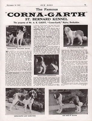 Saint Bernard Breed Kennel Advert Print Page Our Dogs Corna-Garth Kennels 1945