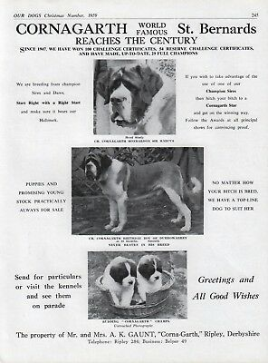 Saint Bernard Breed Kennel Advert Print Page Our Dogs Corna-Garth Kennels 1959