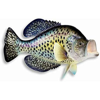 Handpainted Small Wall Sculptures Dot Crappie Mount Decor Plaque Game Fish 15""