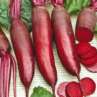 BEET CYLINDRA (250 SEEDS) HEIRLOOM, The best beet for canning!