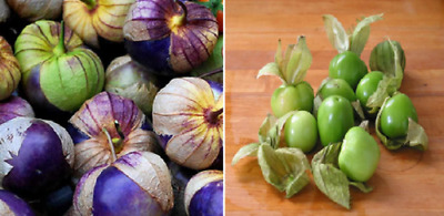 TOMATILLO MIX - PHYSALIS IXOCARPA (50 SEEDS) Green and purple mix!