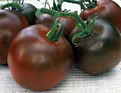 TOMATO BLACK PRINCE (30 SEEDS) very productive HEIRLOOM variety!