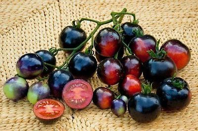 TOMATO INDIGO ROSE (30 SEEDS) Exceptionally high in anthocyanins!