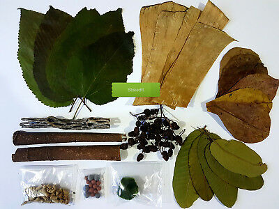 Shrimp Aquarium Kit, Cholla, Catappa, Mulberry, Guava, Banana Leaves food & more