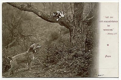 Border Terrier Chases Cat Up Tree Old Dog Postcard