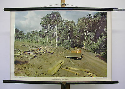 Nice Old Wall Picture Bulldozer Urwaldrodung in Brazil 75x51cm Vintage~1960