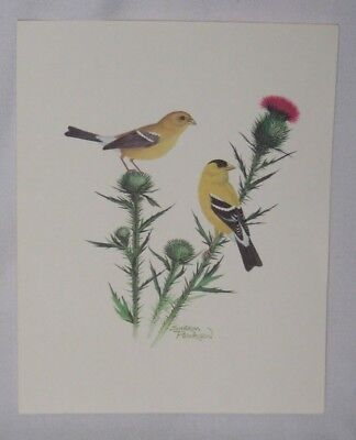 1978 Yellow Finches Print (8X10) by Sherm Pehrson