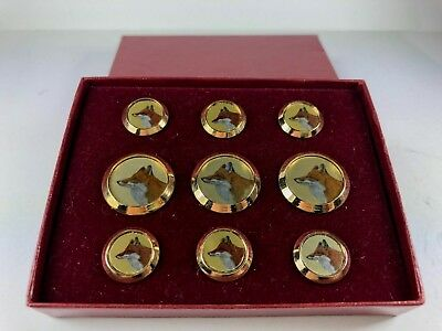 Rare & Unusual Set Of Fox Buttons In Original Box, Beautiful Images Of A Red Fox