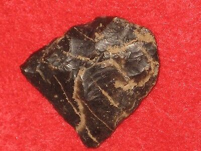 Authentic Native American artifact arrowhead Kentucky paleo blunt N19