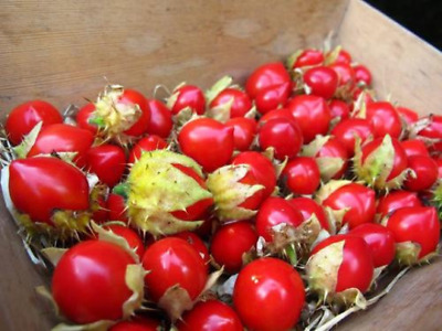 TOMATO LITCHI (30 SEEDS) - Sweet fruits all summer long