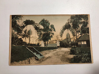 Singapore Old Postcard Travellers Palm Trees, Garden