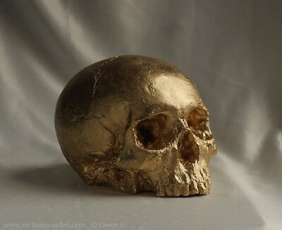 HUMAN SKULL REPLICA (GOLD FINISH), full size hand made from plaster of Paris