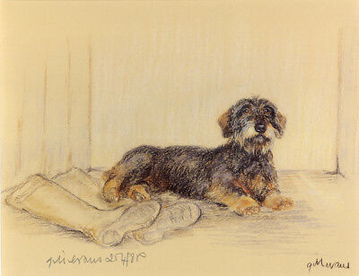 Dachshund Wire Haired Daxi German Sausage Dog Art Limited Edition Print