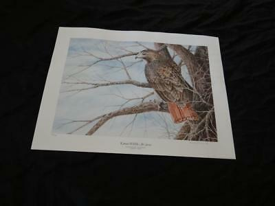 SALINE RIVER RED- TAILED HAWK by Robert D. Channell - signed - KS Wildlife Art