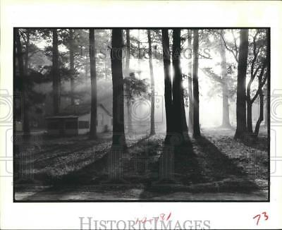 1985 Press Photo Sunrise from Cabin in Big Thicket National Park Romayor, Texas.