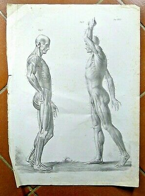 Antique Medicine Doctor Human Body Building Muscles Fitness Sports Gym Decorate