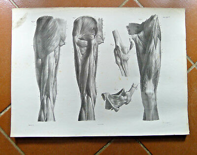 Vintage Print Sports Doctor Medicine Anatomy Human Body Building Gym  Muscles