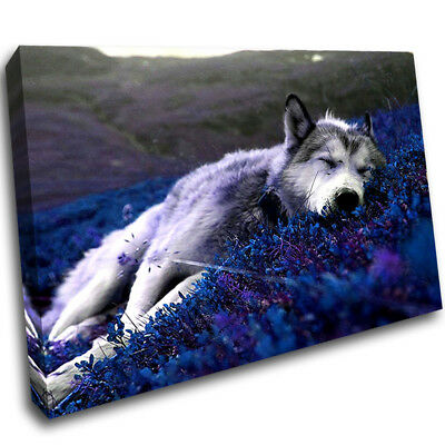 Wolf Sleep Relax Nature Living Framed Wall Canvas 3D Art Picture Mount Room C274