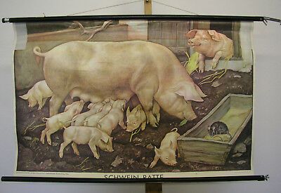 Sublime Tableau Mural Cochon Sau Porcelet Rat 98x63 ~1955 Vintage Animals