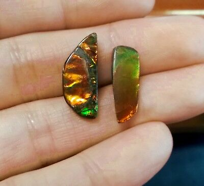 Ammonite ammolite 2 unique red orange green color changer stones