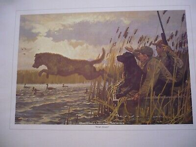 "VINTAGE 12 ILLUSTRATIONS"" WATERFOWL"" from the REMINGTON COLLECTION"